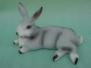 Lepri e conigli