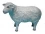Pecore capre e pastori