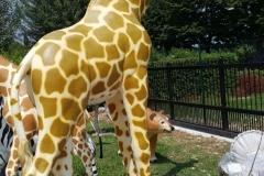 G03 Giraffa 2XL h-320cm